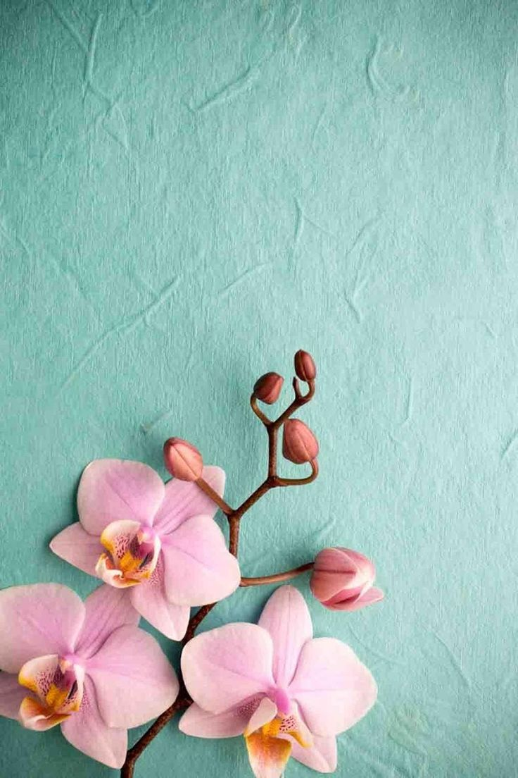 Pink orchid wallpaper iphone iphone wallpapers inspiracje