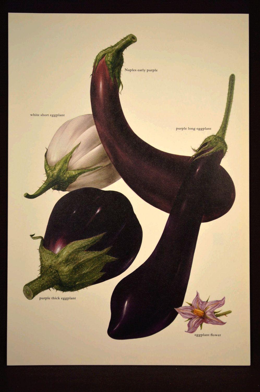 Eggplant Print Kitchen Wall Decor Art Vegetable Food