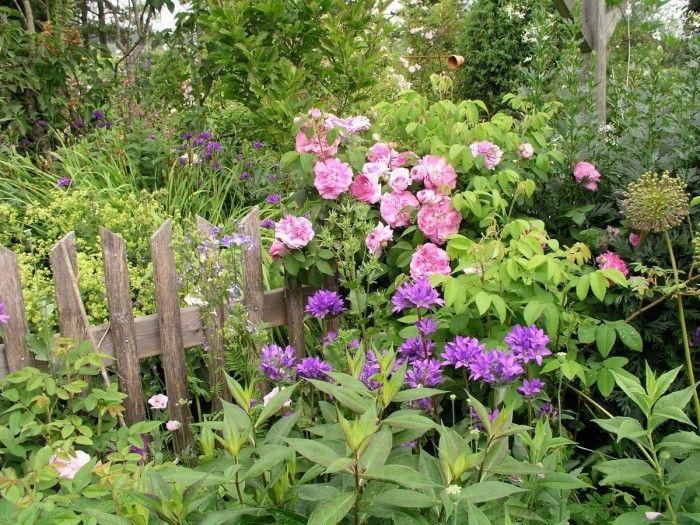 Avoimet puutarhat - Puutarhat > Ailin ruusutarha