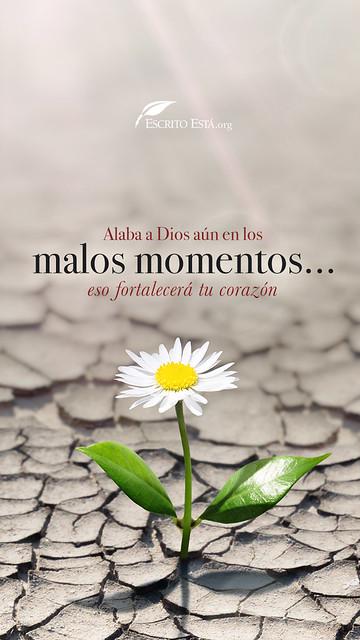 300 Imágenes Cristianas En Hd Para Tu Fondo De Pantalla Recursos Bíblicos Imagenes Cristianas Hermosas Imágenes Cristianas Frases Cristianas