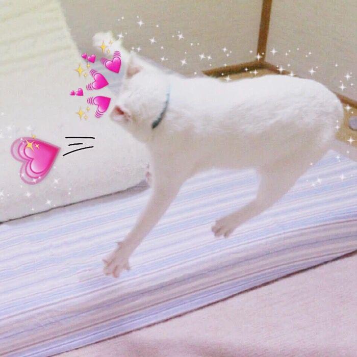 Pin Ot Polzovatelya Hehehehe Na Doske Aesthetic Cat Koshachi Memy Milye Kotiki Milye Detenyshi Zhivotnyh