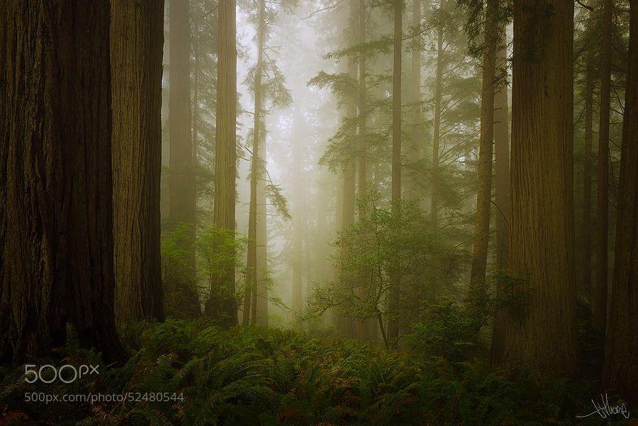 Endor Redwoods by TjThorne