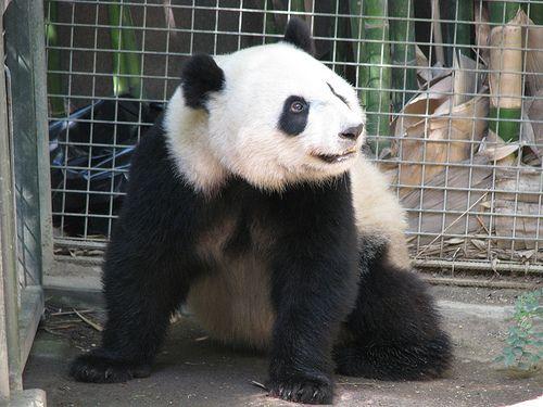 Su Lin | San Diego Zoo | Patty926 | Flickr
