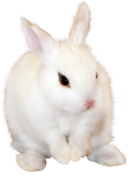 White Bunny Png Clipart Image Animals Rabbit Png Png