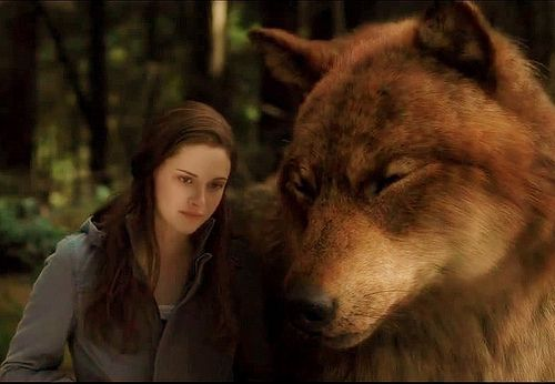 jacob as wolf with bella | Fantasy in 2019 | Twilight jacob