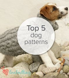 Knitting Patterns For Dogs Coats : Top 5 Free Dog Sweater Knitting Patterns Waterproof dog coats, Patterns and...