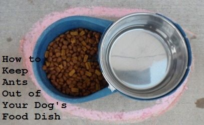 How To Keep Ants Out Of Your Dog Food Dish Dog Food Recipes Dog
