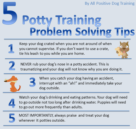 Potty training tips auggie pinterest dog doggies for Dog potty training problems