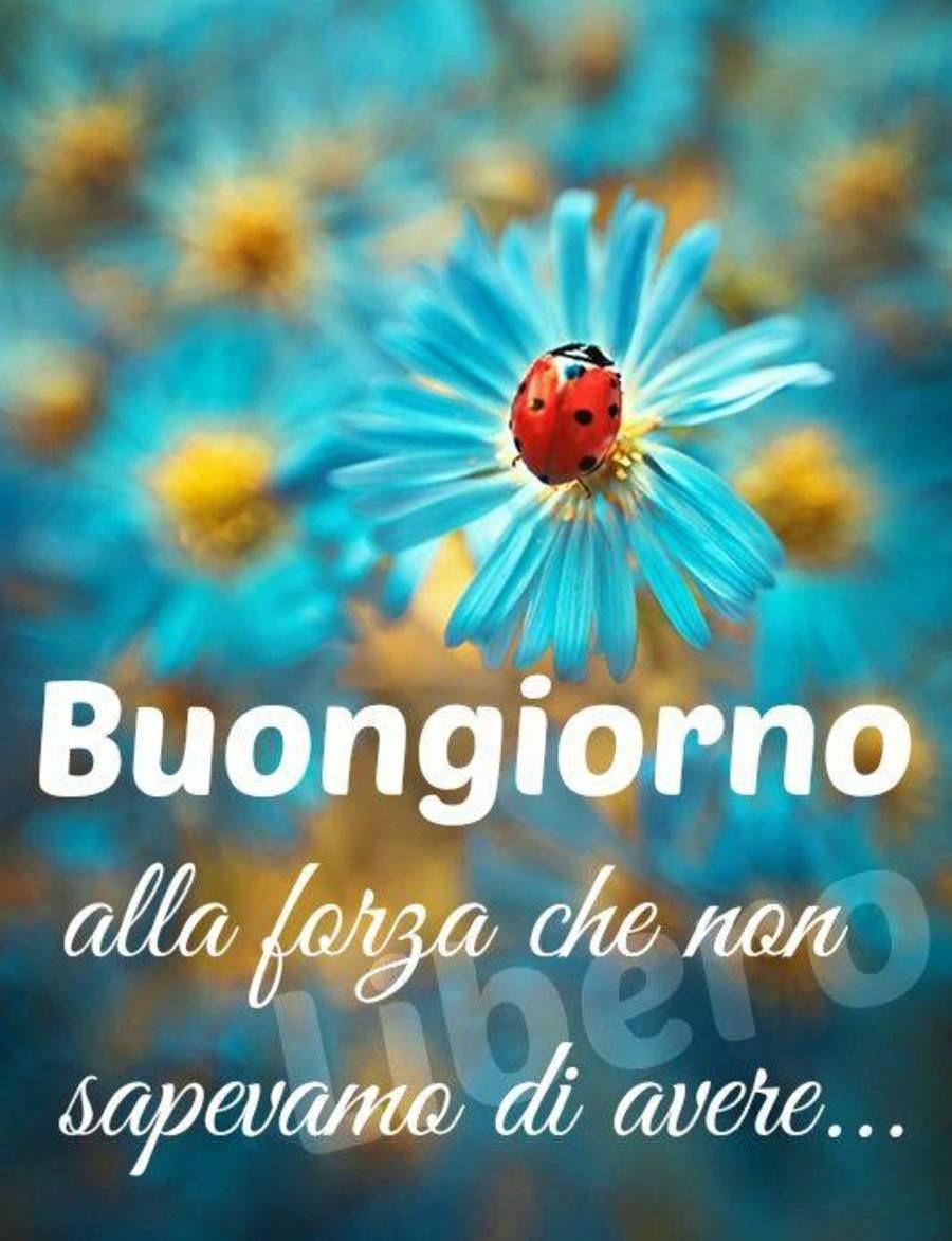 Immagini buongiorno nuove buongiorno ladybug flowers for Immagini buona giornata divertenti