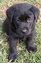 Too Cute Pure Breed Dogs Dog Lovers Cute Animals