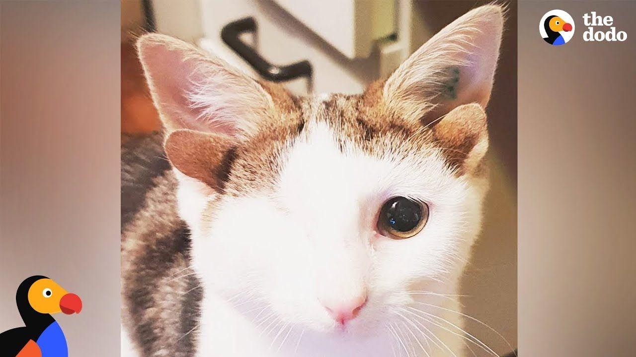 Cat With 4 Ears Loves Helping Foster Kittens Frankenkitten The Dodo Foster Kittens Kittens Adorable Kitten
