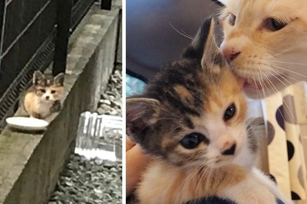 Stray Kitten Found Without a Mom Finds Love in 5 Other