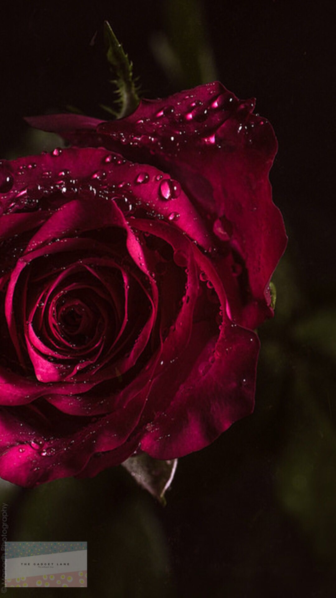 Black Theme Wallpaper Iphone Android Beautiful Roses Red Roses Beautiful Flowers
