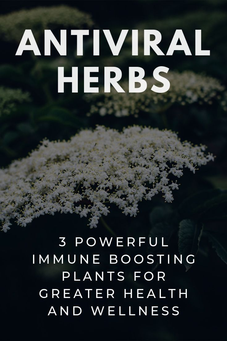 Photo of Antiviral Herbs: 3 Powerful Immune Boosting Plants that Fight Disease