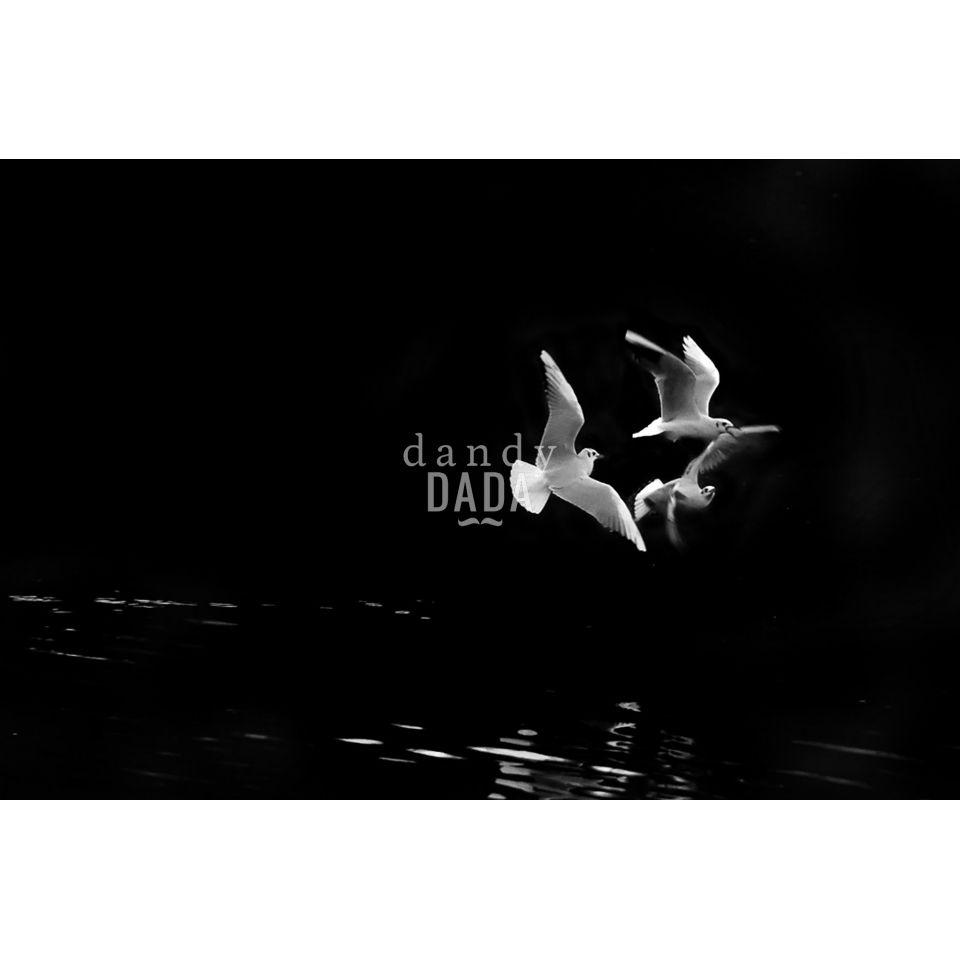 Gabbiani in volo. Fotografia in edizione limitata Black and Wild di Angelo…