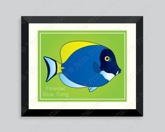 Allison Fullam First Time I Saw A Powder Blue Tang I Knew That Was The Fish For Me Beautiful Personable And Majestic With Images Fish Pet Fish Blue Tang