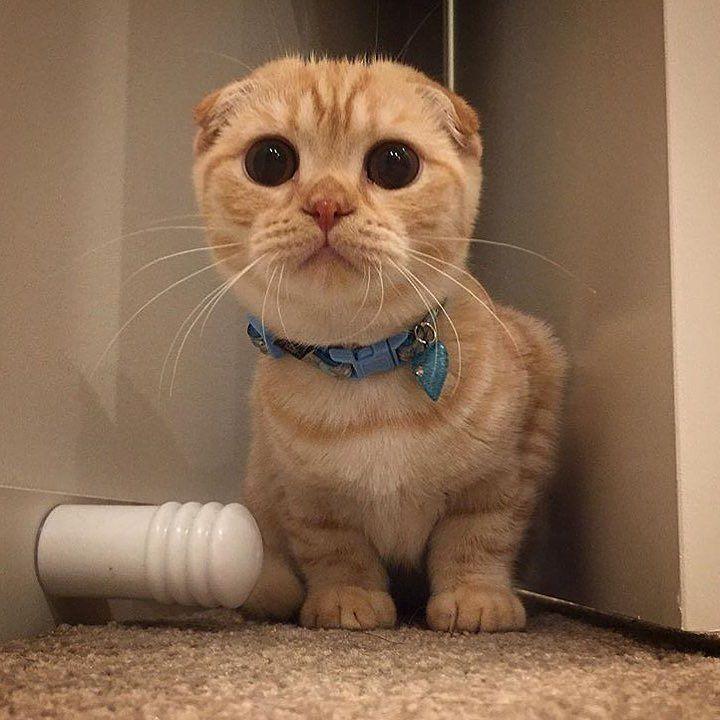 #cat #katze #cats #cute #pet #kedi #kedicik #yavru