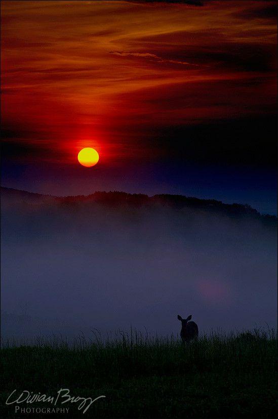 Foggy Appalachian Morning by william brozy on 500px