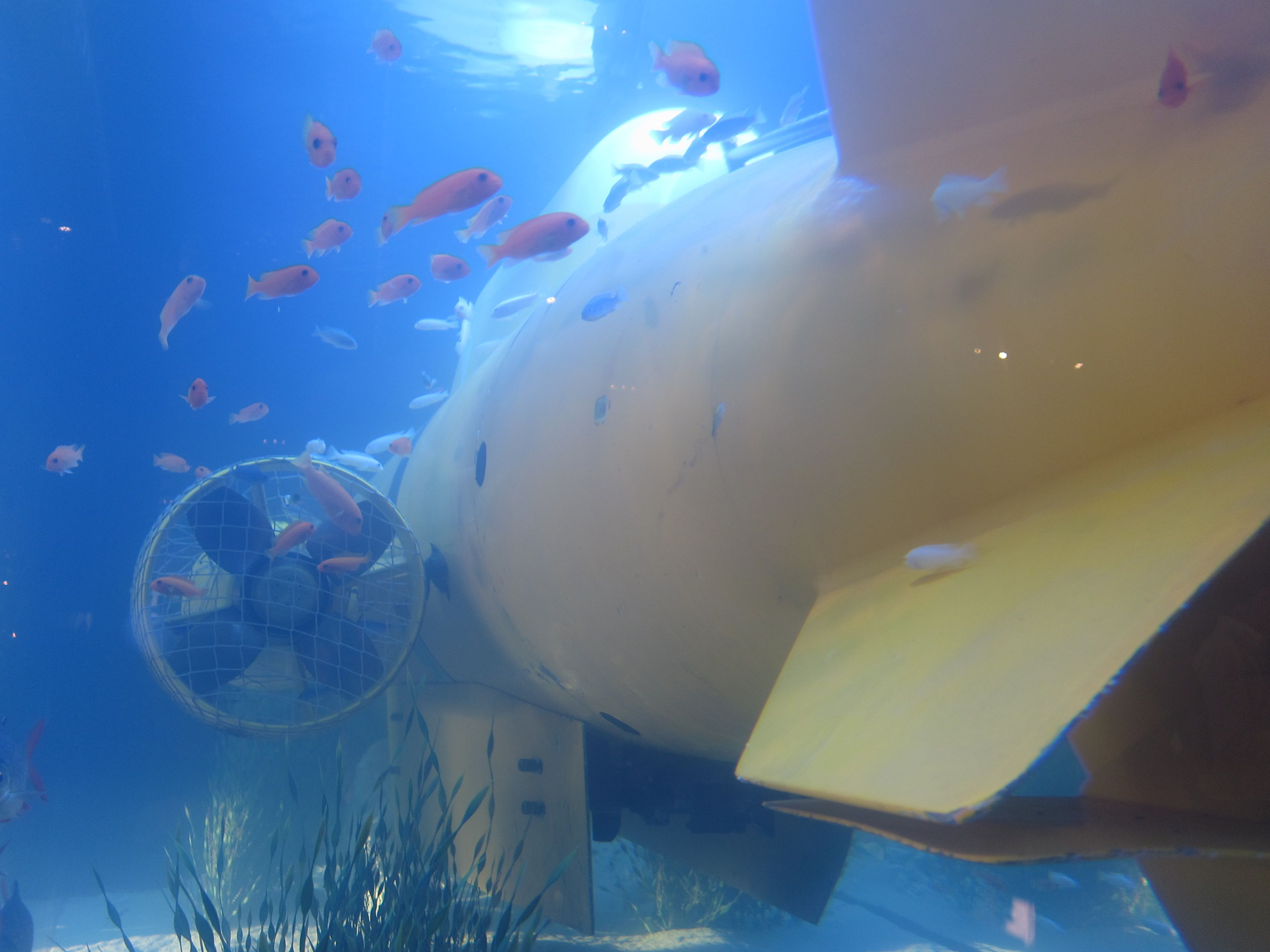 Freshwater Submarine tank at Timothy Oulton Dallas by Fish Gallery