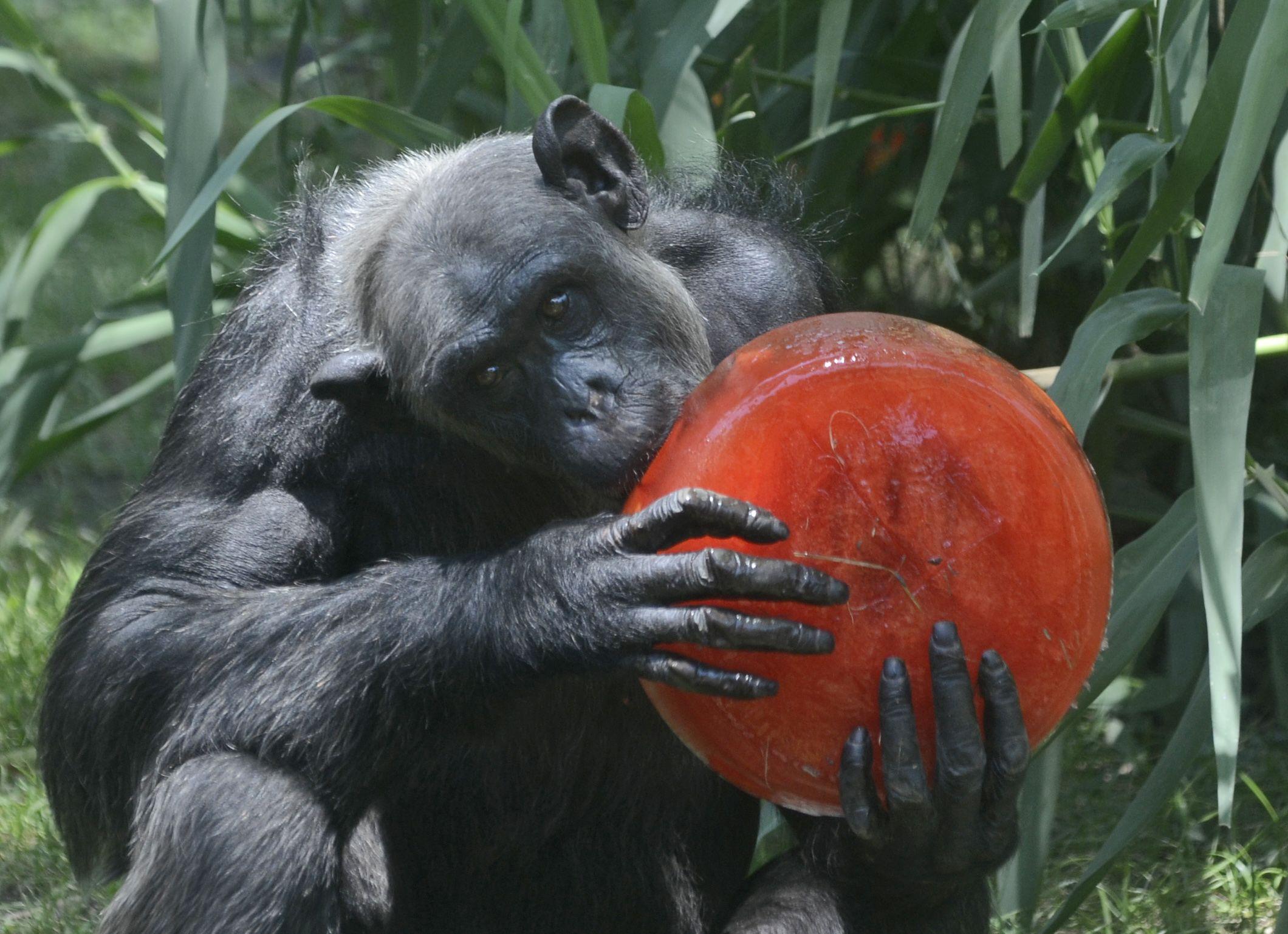 Zoo Animals Keep Their Cool | Nature | Animals, Zoo animals