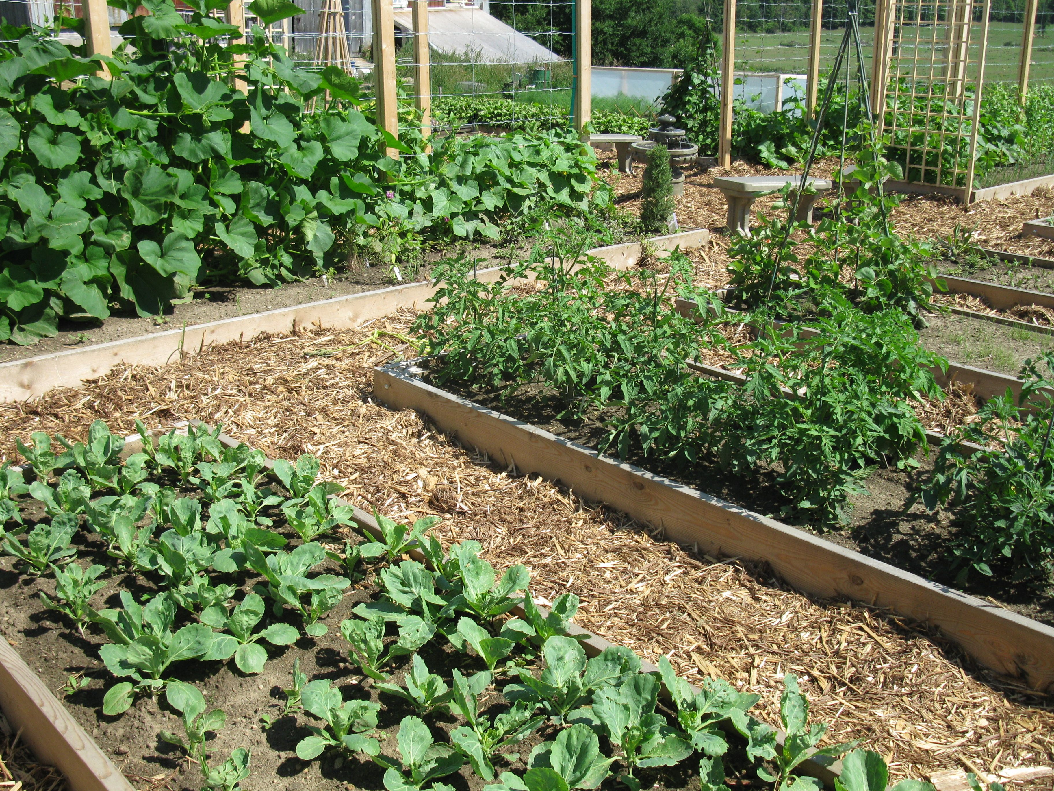 Lazy Vegetable Gardening-Perennial Plants for your Herb ...