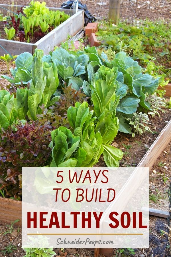 5 Easy Ways to Build Healthy Garden Soil is part of Healthy garden soil - Soil is the foundation of our gardens  If you want a large harvest you need to build healthy garden soil  These five easy steps will give you great soil!