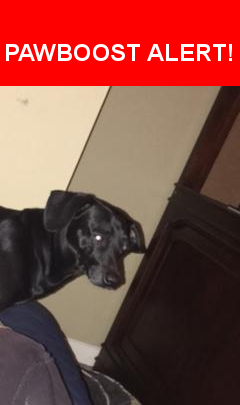 Is this your lost pet? Found in Manvel, TX 77578. Please spread the word so we can find the owner!  Description: Male , Wiener dog mix, Black in color  Nearest Address: HWY 6/288 Manvel