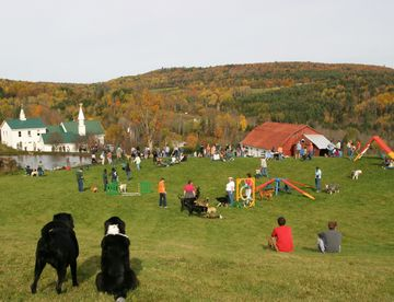 Meet Up At Dog Mountain In St Johnsbury Vt Dogs Mountains