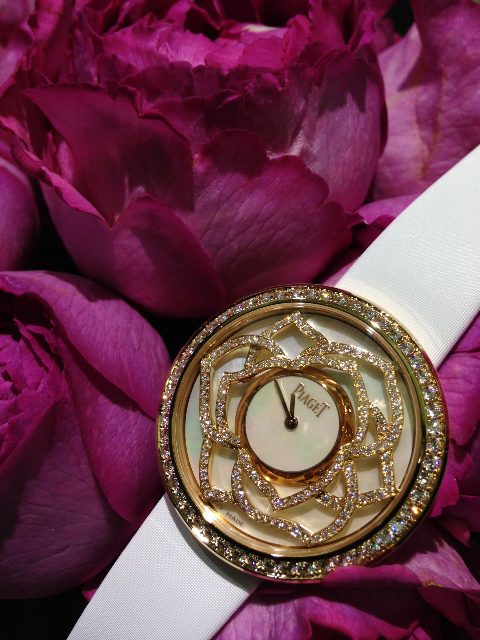 Piaget Rose Day sur Pinterest