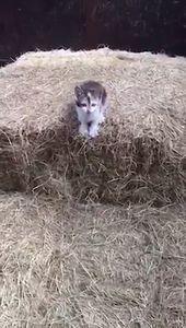 28 faits époustouflants sur les chats à connaître  Cute