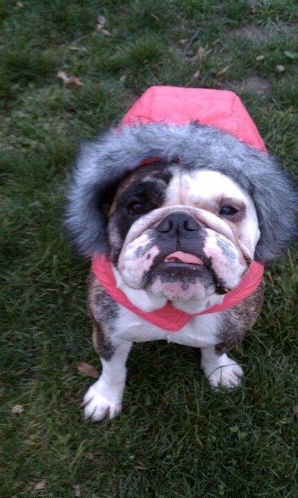 My Little Eskimo Puppy Lover Bulldog Furry Friend