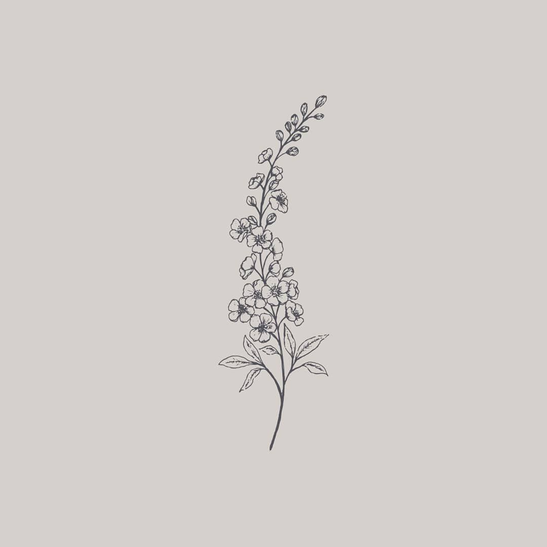 Delphinium Line Drawing It S Just Asking To Be Turned Into A Repeat Pattern Larkspur Flower Tattoos Cursive Tattoos Wildflower Tattoo