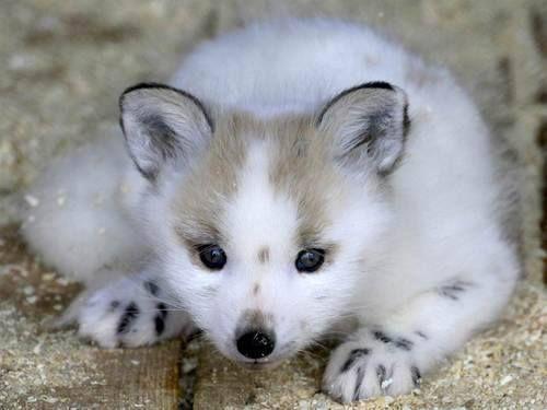 tumblr_mu2ng2loIC1stlkgho1_500.jpg | Animals | Pinterest ...