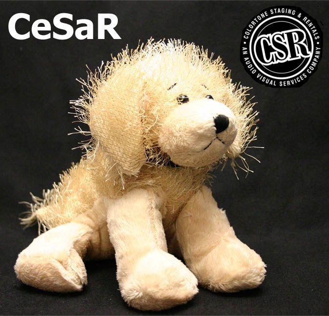 #CeSaRthedog