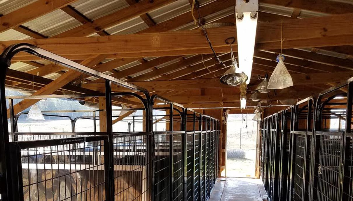 Multiple Dog Kennels In A Old Style Barn Building This Facility Turned Out Gorgeous Dog Kennel Dog Boarding Kennels Kennel