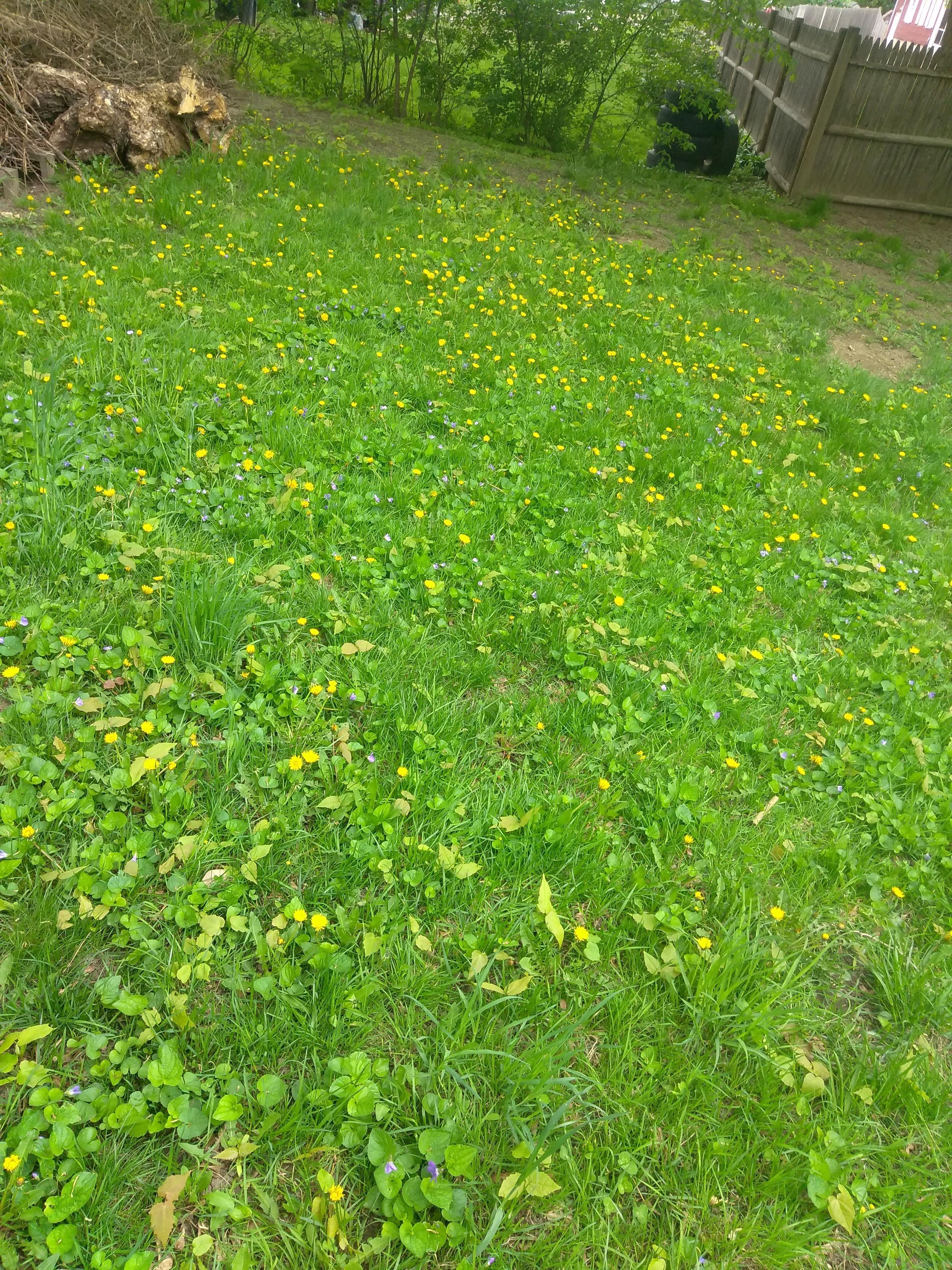 76b7963f6c08c328953918658d196e14 - How To Get Rid Of Corn Speedwell In Lawn