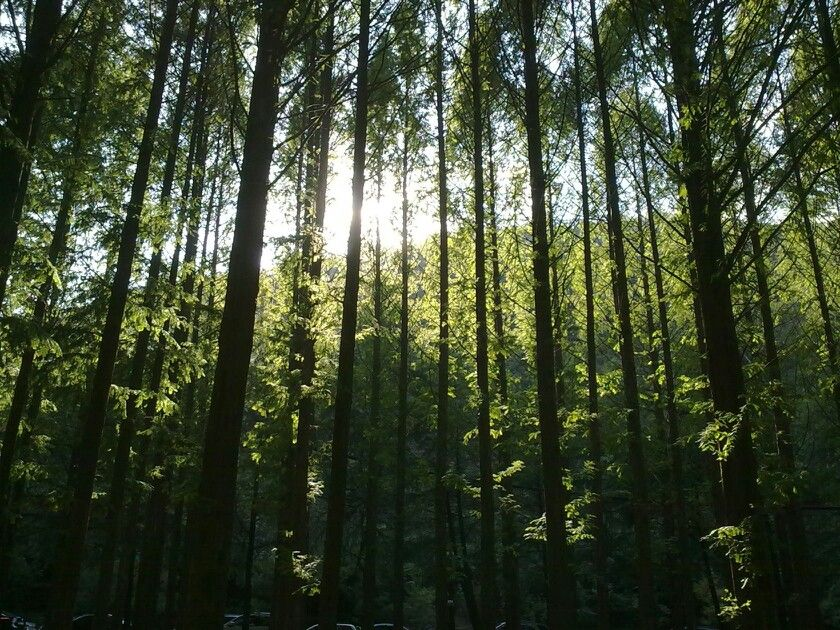 키다리나무..