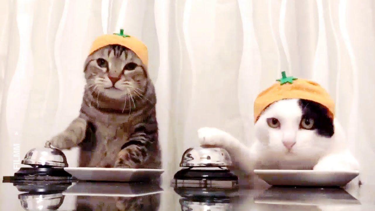 قطط مضحكة جدا مقاطع مضحكة للقطط اضحك من قلبك Funny Cute Cats Funny Cat Compilation Cute Cats