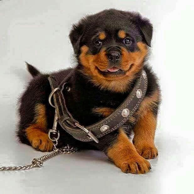 Kopek Hund Dog Con Imagenes Cachorros