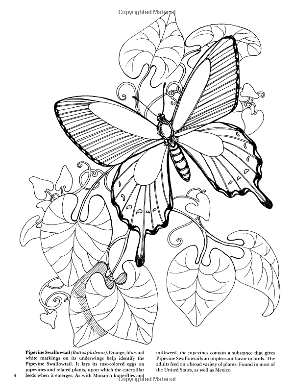 Butterflies Coloring Book Dover Nature Coloring Book Jan Sovak 9780486273358 Amazon Com Books Butterfly Coloring Page Coloring Pages Colorful Butterflies