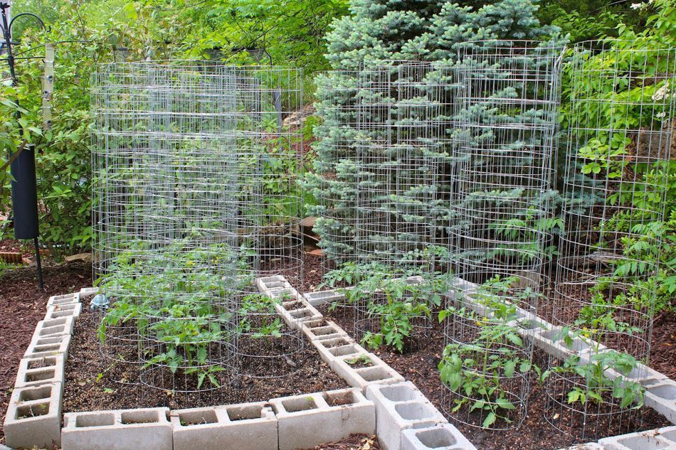 Small Backyard Vegetable Garden Ideas Tomato Gardening Pinterest