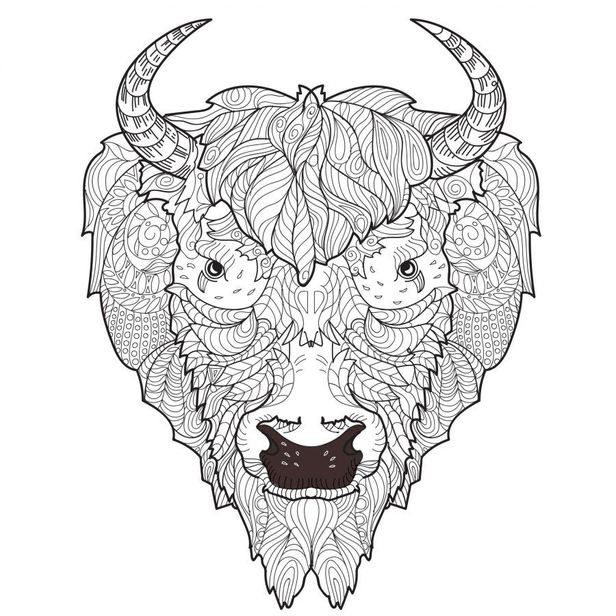 Adult Coloring Pages Bison Adult coloring pages, Doodle