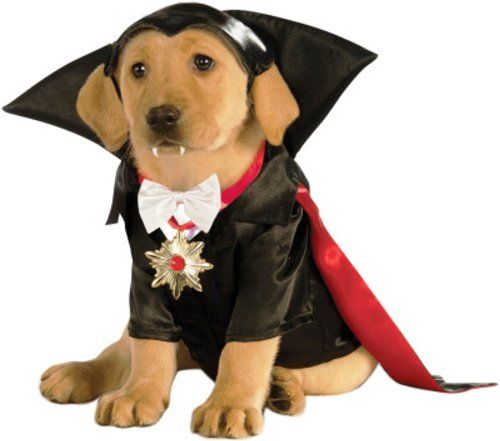 Funny Costumes For Small Dogs Pet Costumes Pet Halloween