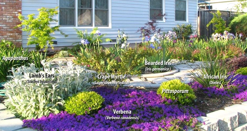 Merveilleux Drought Tolerant Landscape, California | Some Native Plants Are Drought  Tolerant As Well As Low Maintenance .