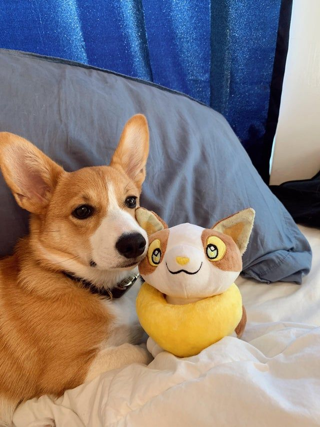 Mochi and her new buddy Yamper⚡️