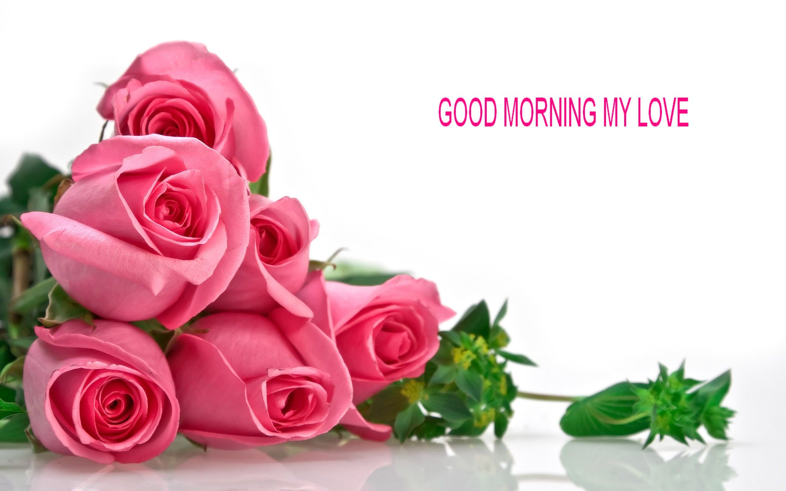Good Morning Rose Wallpapers Free Download