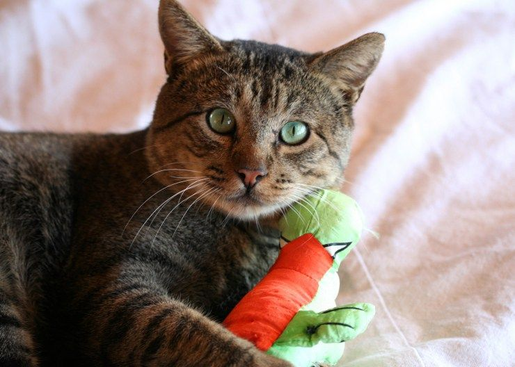how to prevent mastitis in cats