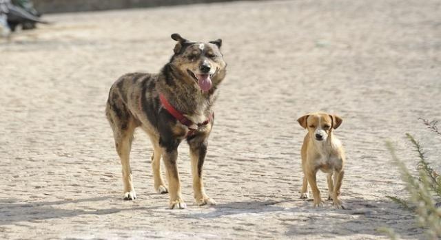 Il calvario dei terremotati che possiedono un cane - Blasting News - http://bit.ly/2eVtBtA - Pet Community and Social Network