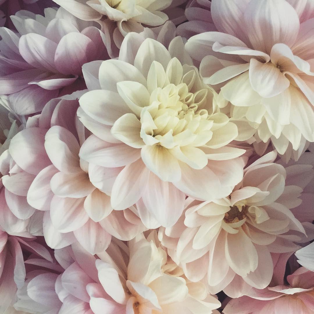 Ndredfloral floral plants pinterest plants