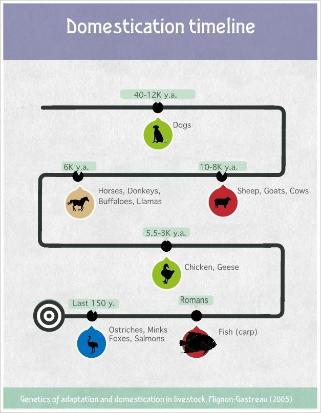 Animal domestication timeline by Canis bonus | Animal